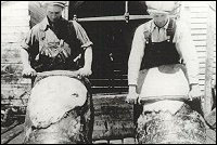 Fishermen's Union Trading Company employees Tom Russell and Jack Sweetland working seal pelts.