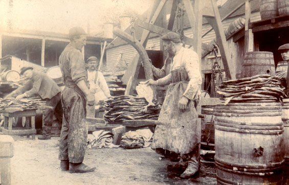 Five men weighing and sorting salmon, Job Brothers & Co. south side premises, St. John's harbour