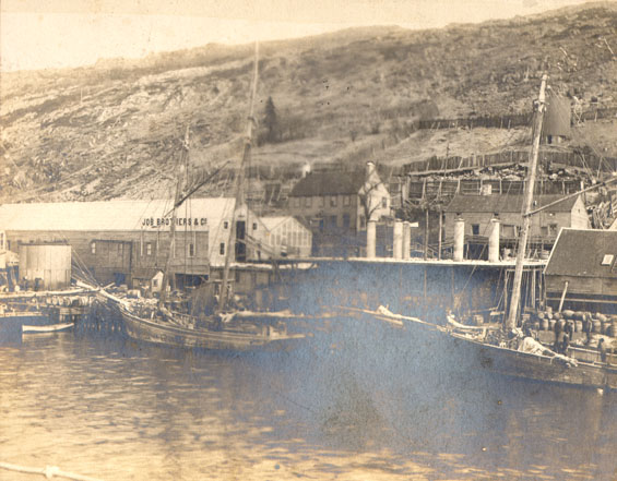 Schooners landing seals at Job Brothers & Co. south side premises, St. John's harbour
