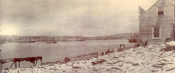 View of St. John's harbour taken from Job Brothers & Co. south side premises