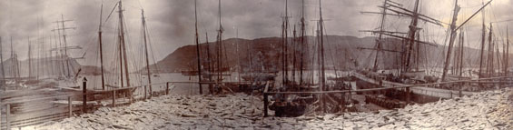 Panoramic view of St. John's harbour from Job Brothers & Co. premises, north side, showing codfish spread to dry on flakes