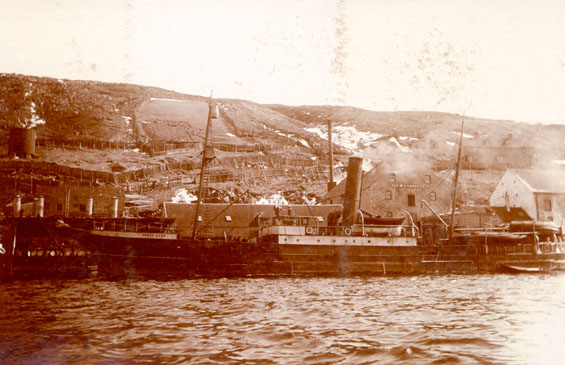 "S.S. ""Grand Lake"" landing seals at Job Brothers & Co. premises, south side, St. John's harbour"