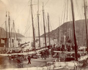 Another view of Job Brothers & Co. premises, north side, St. John's harbour