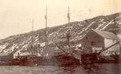 "S.S. ""Diana"" discharging seals at Job Brothers & Co. south side premises, St. John's harbour"