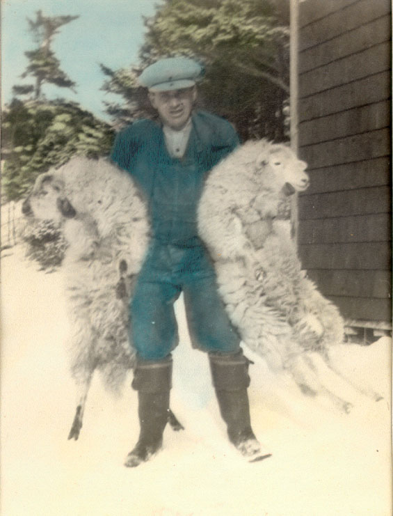 Frank Denty with two sheep at Coffin's Cove, Harbour Buffett, Placentia Bay.