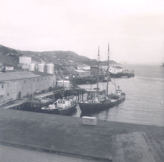 Vessels at Wareham's wharf, Harbour Buffett, Placentia Bay.