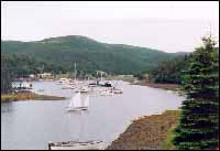 Boats in the harbour for the reunion at Harbour Buffett, Placentia Bay.